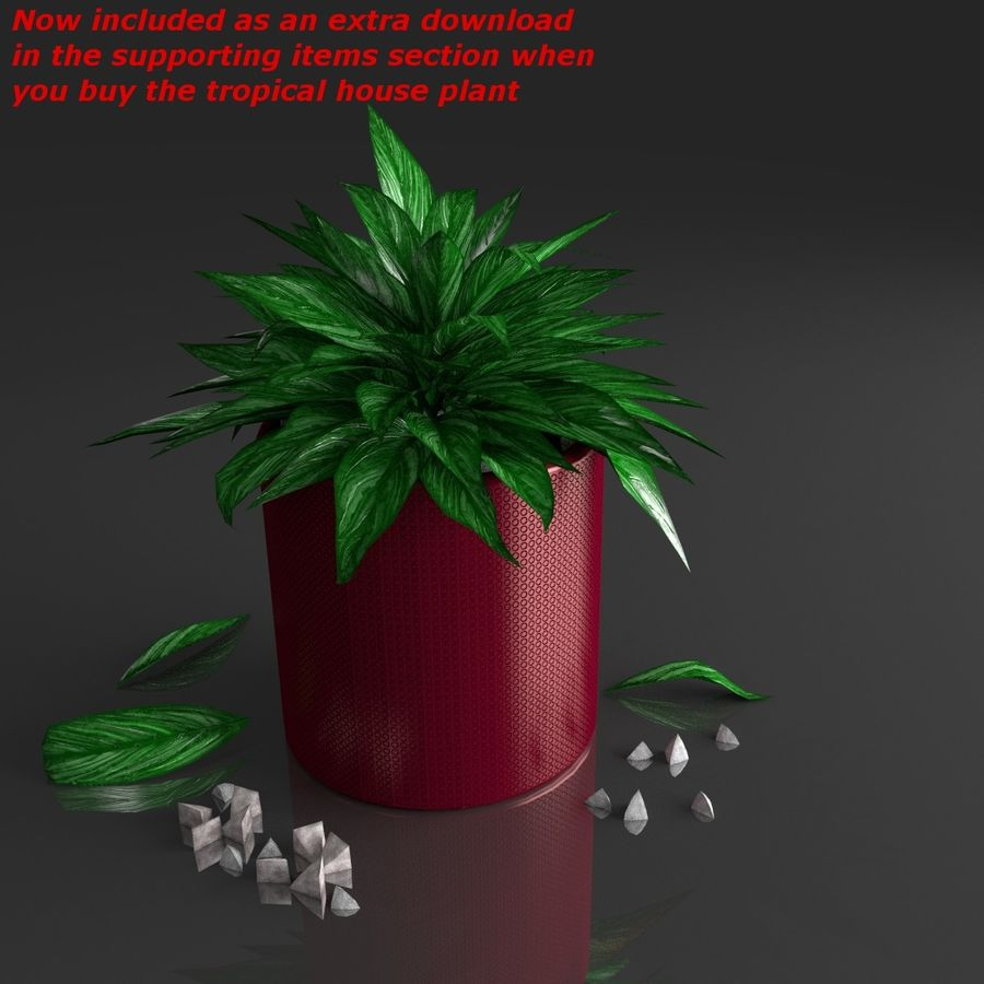 Tropical house plant royalty-free 3d model - Preview no. 2