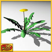 dandelion flower 3d model