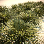 HQ-Vegetation - Wild grass 3d model