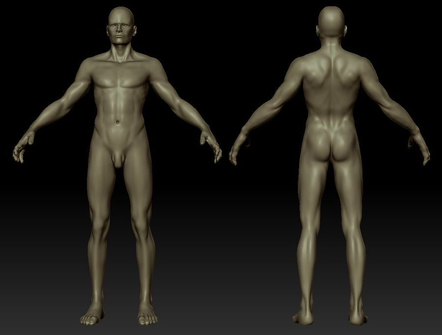 Human Male Bas Naked royalty-free 3d model - Preview no. 11