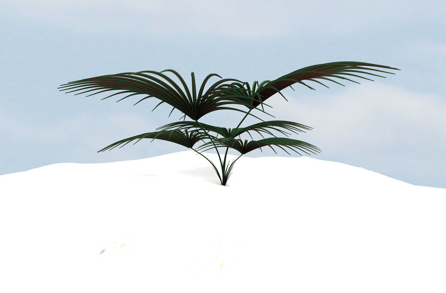 Tropical Plant royalty-free 3d model - Preview no. 3