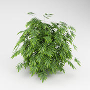 Bamboo_garden_bush_02 3d model