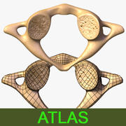 Atlas (vertebra) 3d model