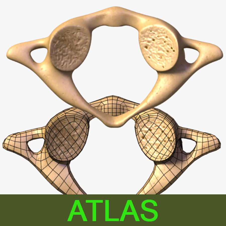 Atlas Vertebra 3d Model 3 Obj X Lwo 3ds Free3d