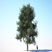 HQ-Vegetation - Generic Tree 1 3d model