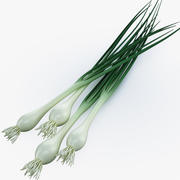 Onion green 3d model