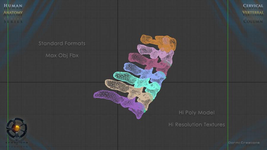 Vertebral column cervical 3d model 25 x fbx obj free3d vertebral column cervical royalty free 3d model preview no 7 gumiabroncs Choice Image