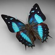 Butterfly 9 3d model