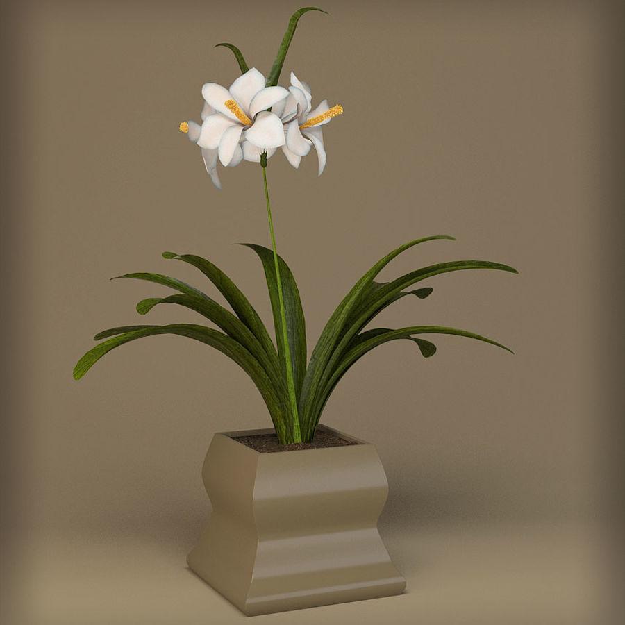 pot de fleur royalty-free 3d model - Preview no. 2
