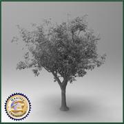 リンゴの木 3d model