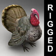 Turkey rigged 3d model