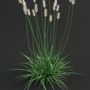 Agropyron grass 3d model