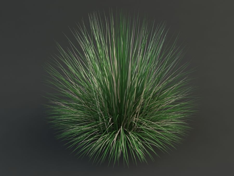 poa bluegrass royalty-free 3d model - Preview no. 1