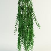 낙엽송 larix pendula 3d model