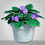 Домашнее растение Фиолетовый цветок 3d model