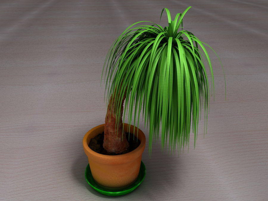 Palm Tree Plant Pot royalty-free 3d model - Preview no. 1