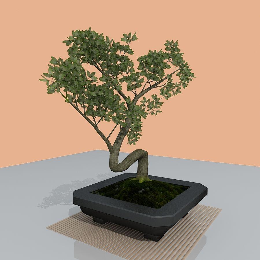 bonsai tree royalty-free 3d model - Preview no. 6
