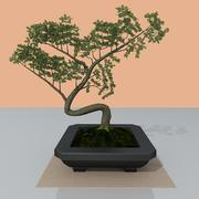 Bonsai träd 3d model