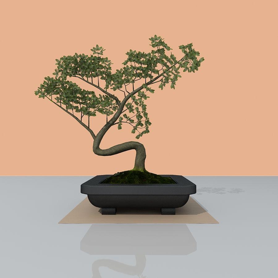 bonsai tree royalty-free 3d model - Preview no. 7