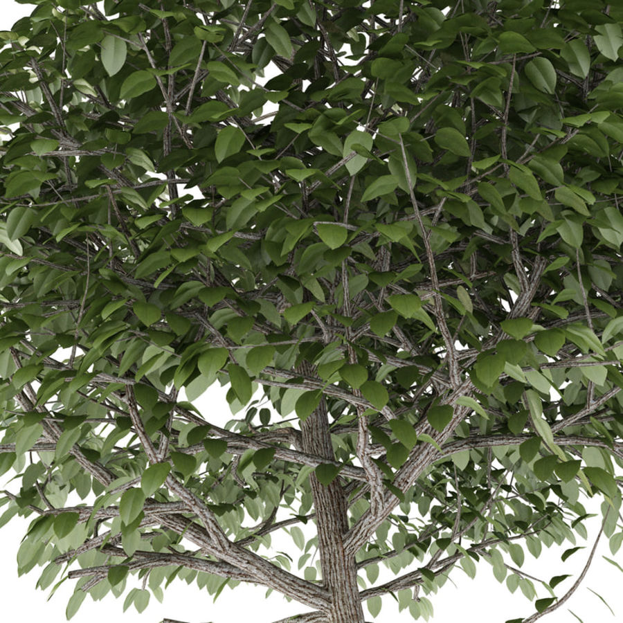 Tree Trimmed Sphere royalty-free 3d model - Preview no. 3