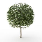 树修剪球 3d model