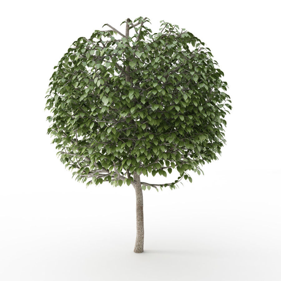 Tree Trimmed Sphere royalty-free 3d model - Preview no. 1