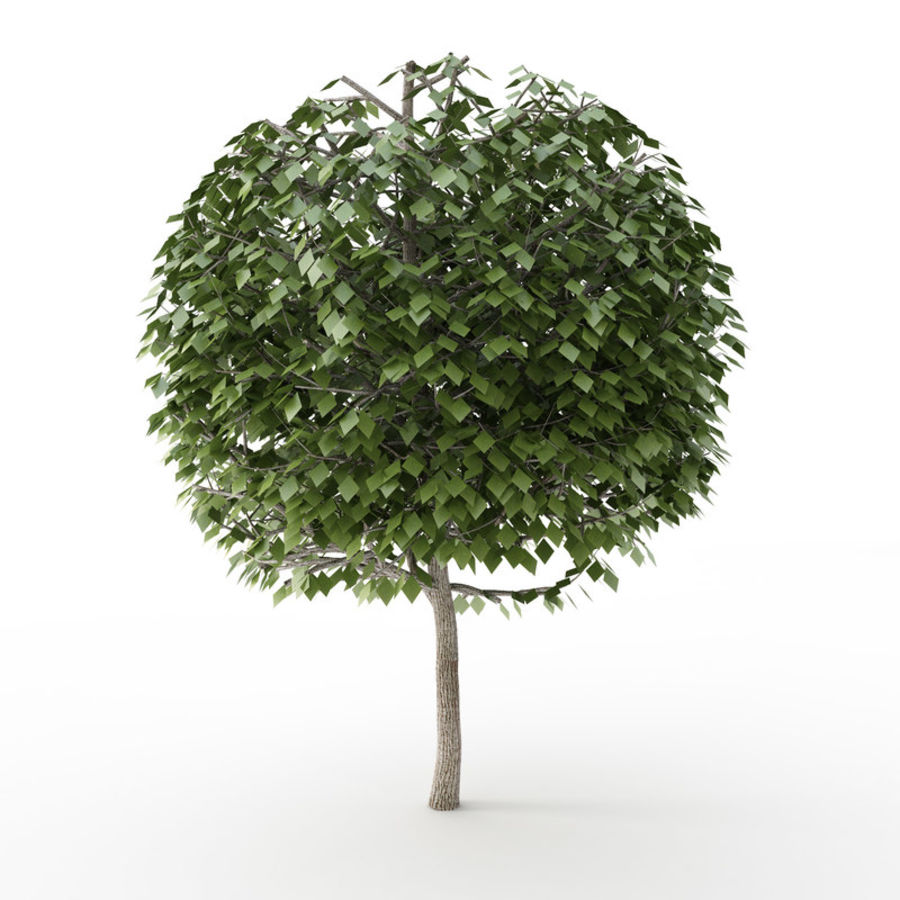 Tree Trimmed Sphere royalty-free 3d model - Preview no. 4