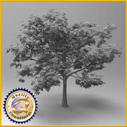 Chestnut tree 3d model