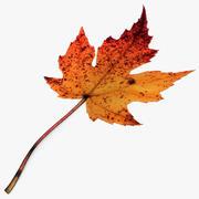 Fall Leaf 3d model