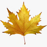 Autumn maple leaf v6 3d model