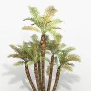 Plant Palm Phoenix Pack 3d model