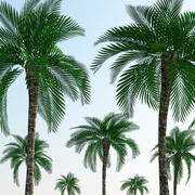 Low Polygon Palm Tree 3d model