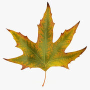 Autumn maple leaf v1 3d model