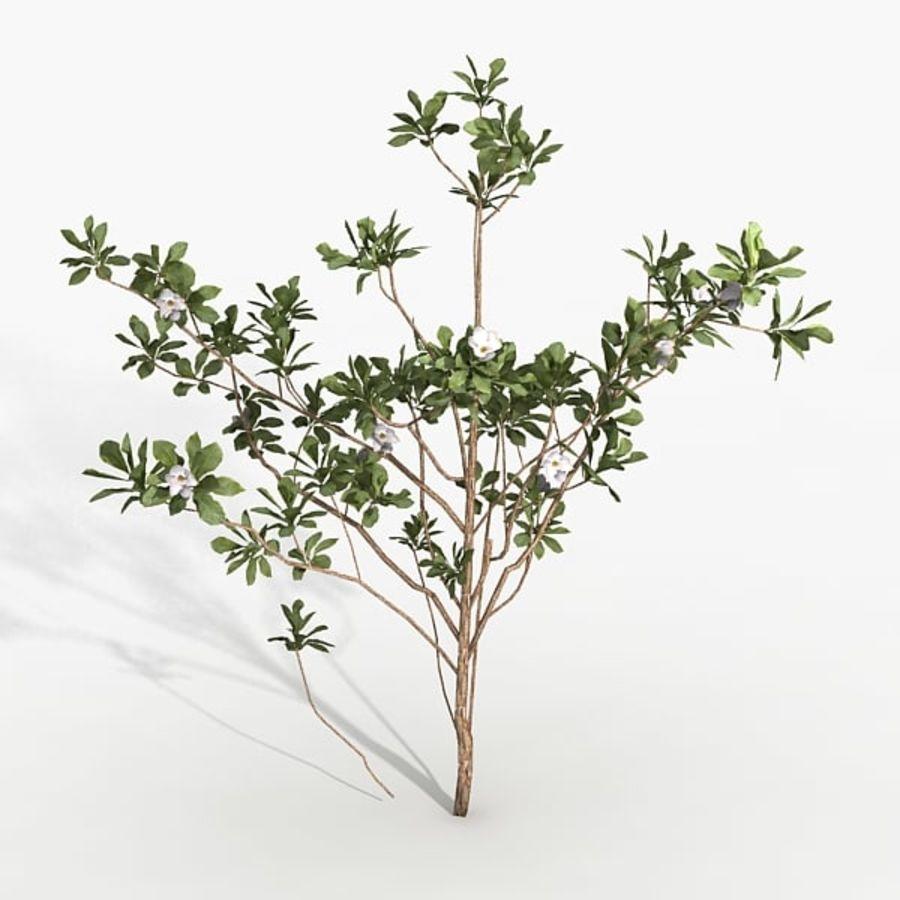 Växt Magnolia royalty-free 3d model - Preview no. 1
