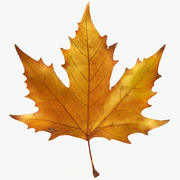 Autumn maple leaf v5 3d model