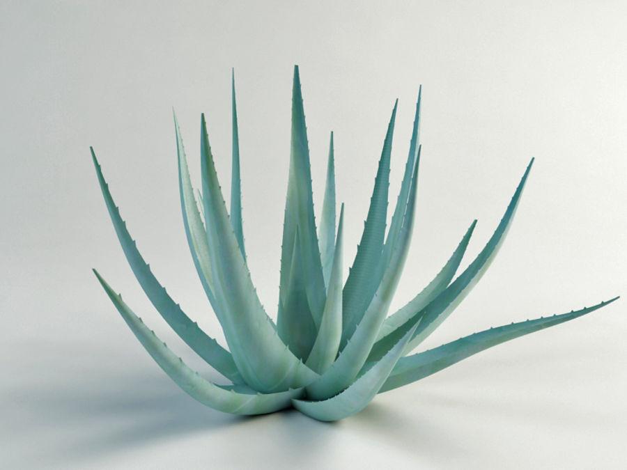 アガベ世紀の植物 royalty-free 3d model - Preview no. 3