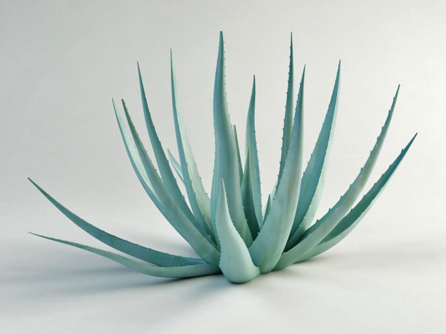 アガベ世紀の植物 royalty-free 3d model - Preview no. 2