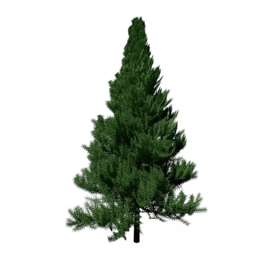 Pine Tree royalty-free 3d model - Preview no. 5