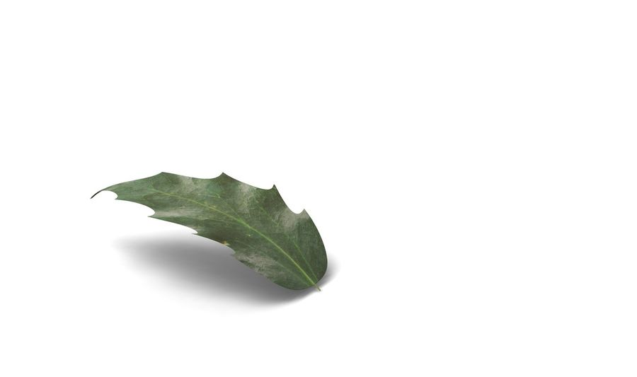 Leaf royalty-free 3d model - Preview no. 1