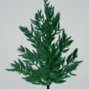 ağaç 3d model