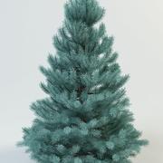fir spruce picea 3d model
