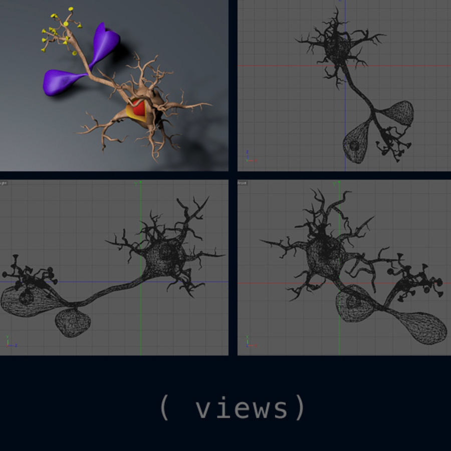神经元解剖纹理 royalty-free 3d model - Preview no. 2