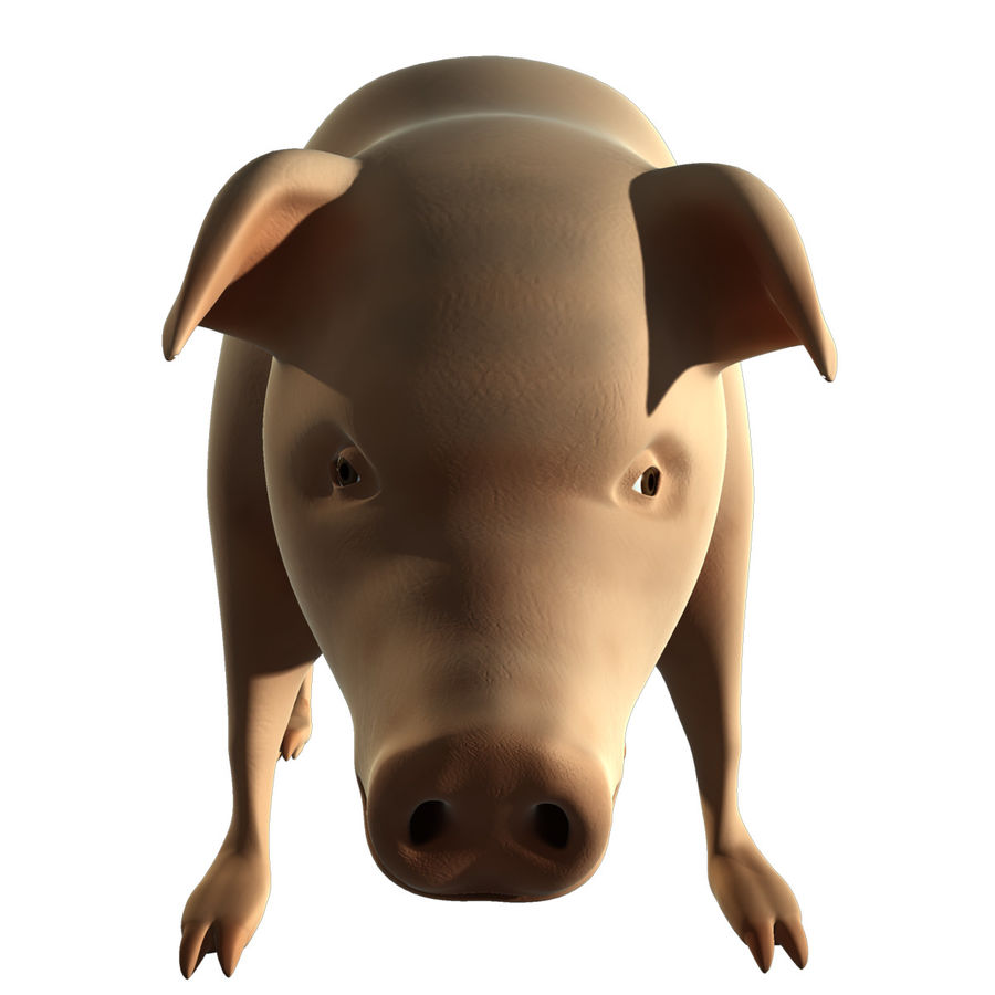 Pig Low Poly royalty-free 3d model - Preview no. 6