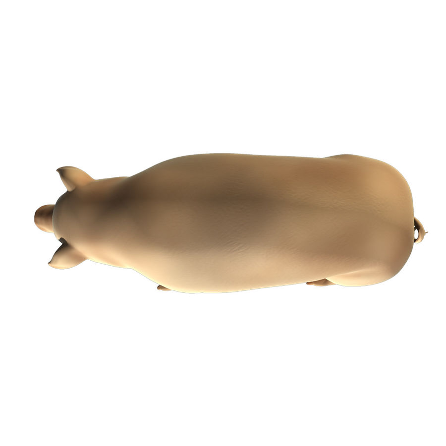 Pig Low Poly royalty-free 3d model - Preview no. 5