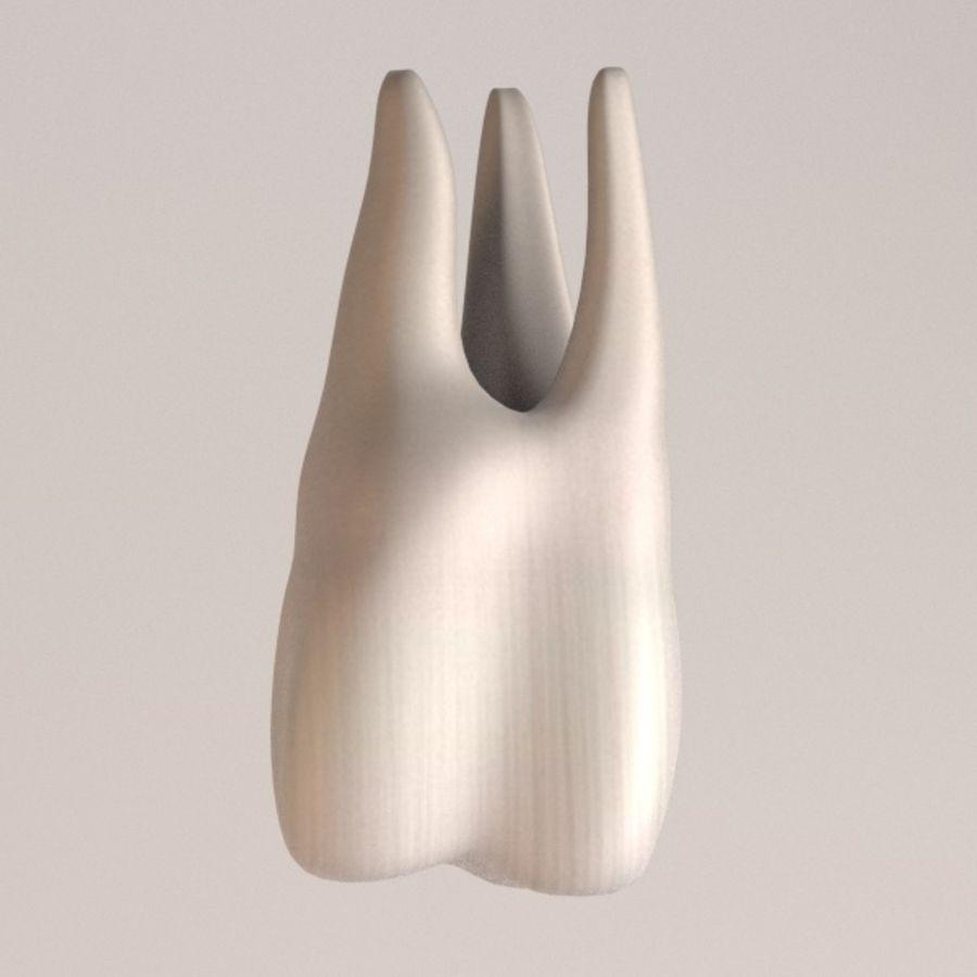 tu7-second molar royalty-free 3d model - Preview no. 1