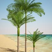 king palm 3d model