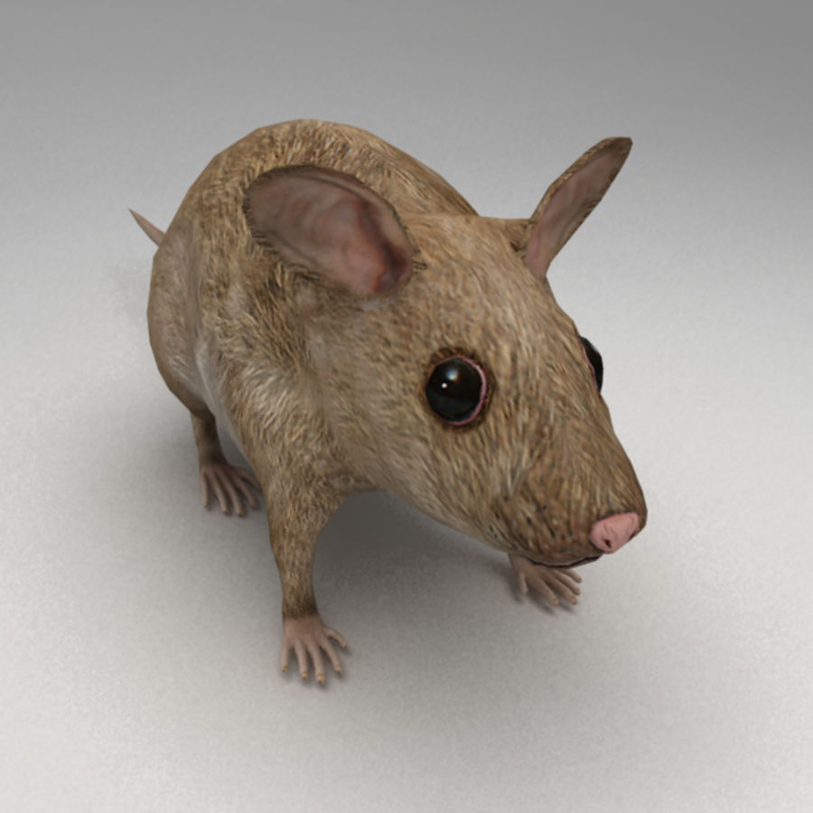 Mouse rigged royalty-free 3d model - Preview no. 5