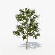 Tree_03 3d model