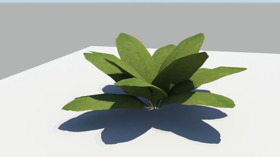 Leaf Plant royalty-free 3d model - Preview no. 1
