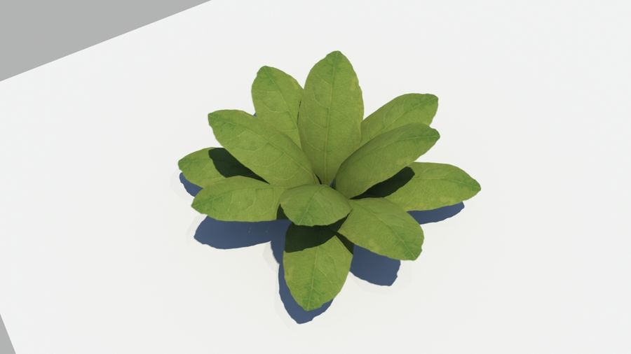 Leaf Plant royalty-free 3d model - Preview no. 2
